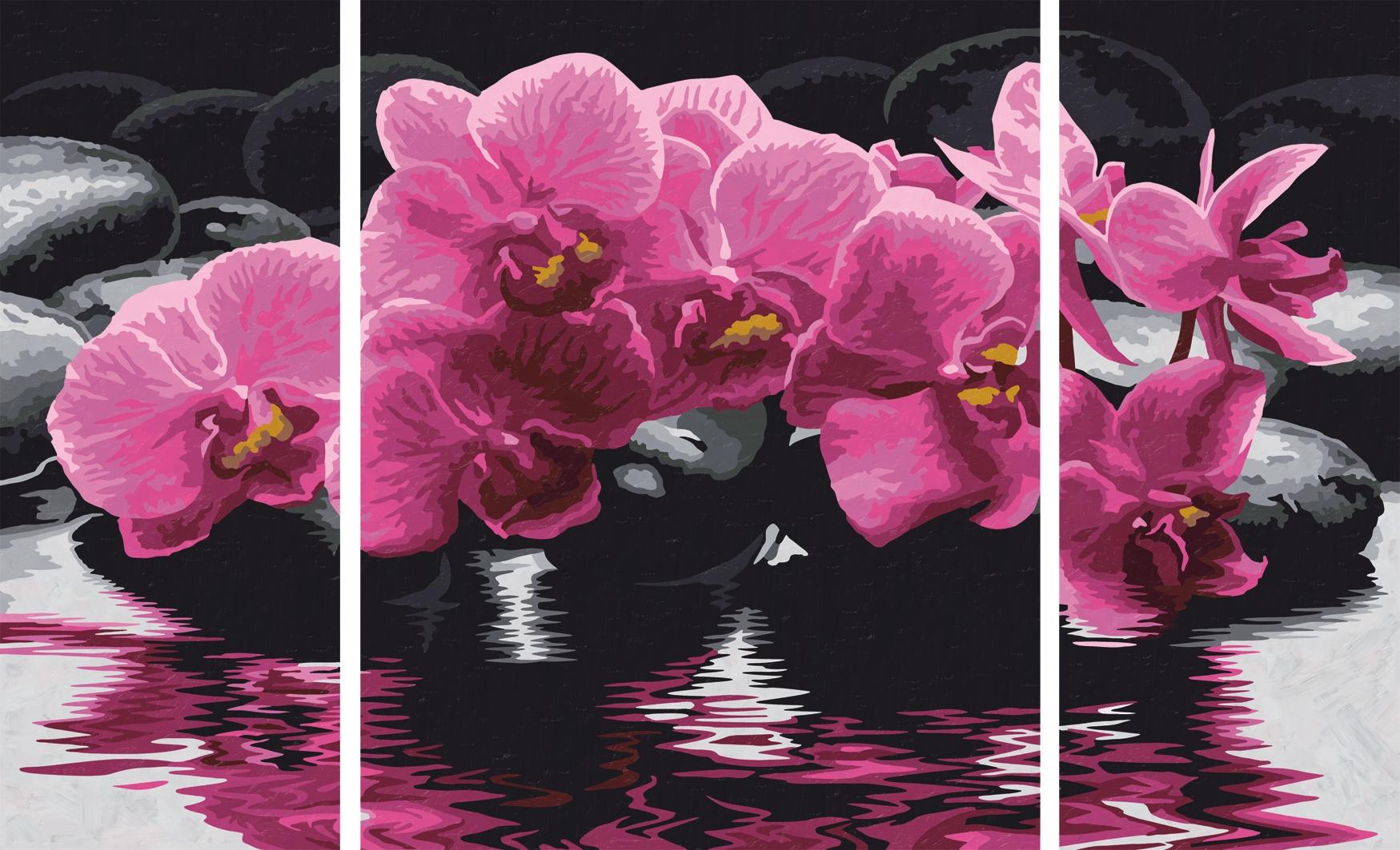 76071-orchidee